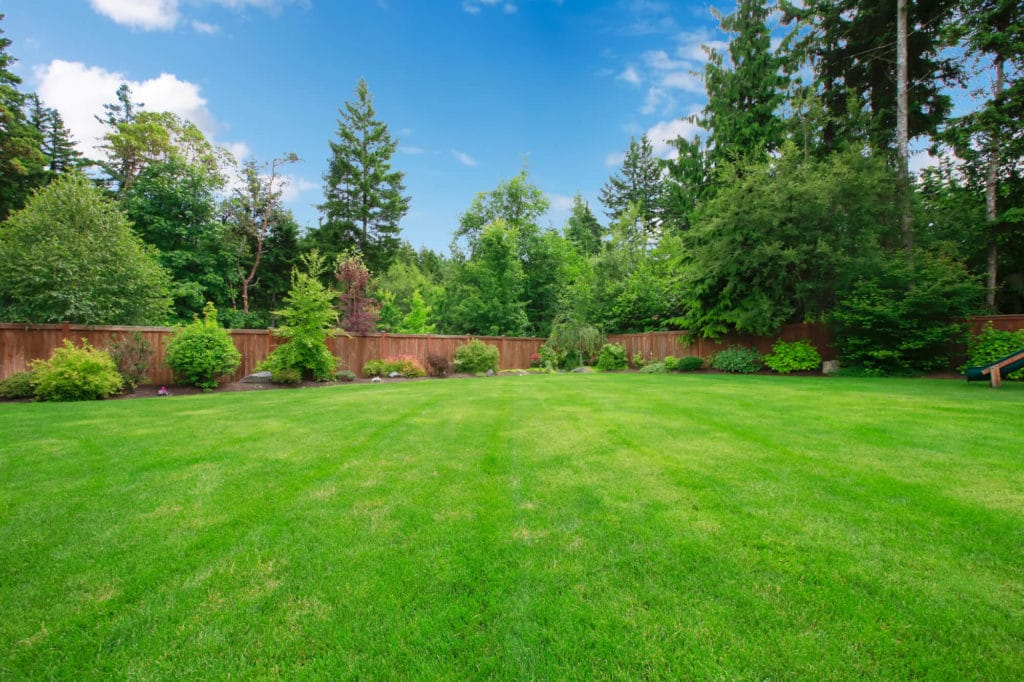 Lawn with trees, fences and blue sky