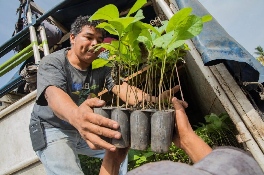 Man giving small trees in pots to another person