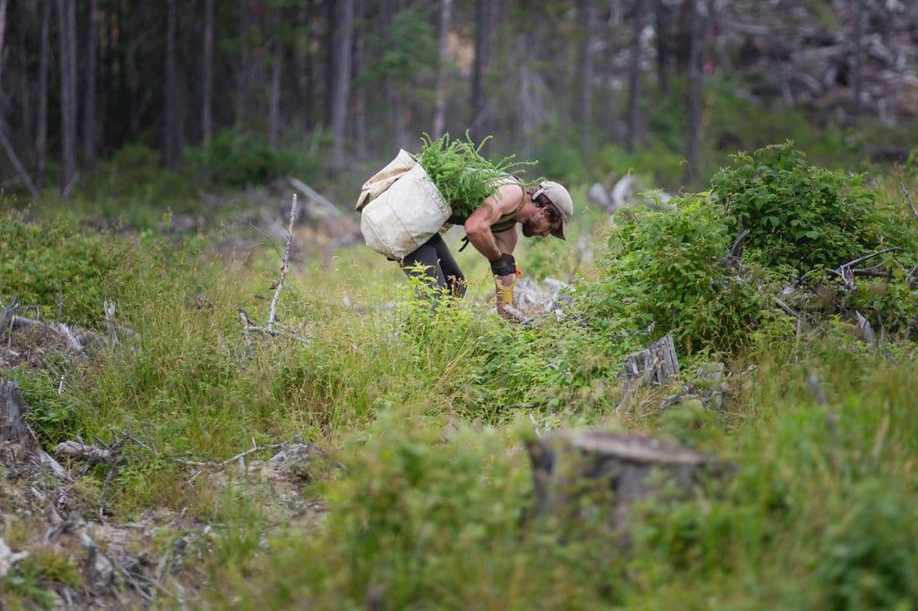 Man planting trees in forest